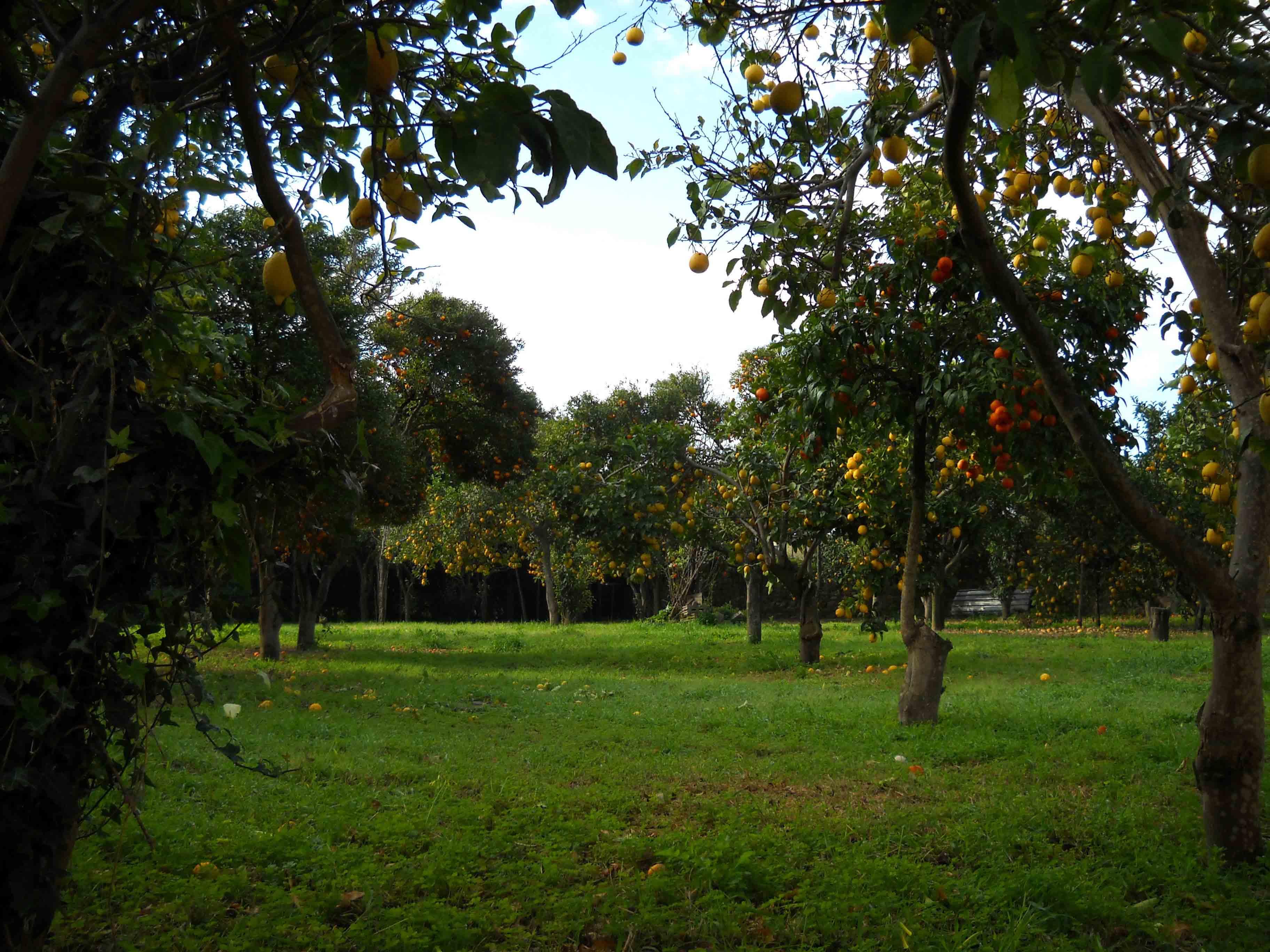 Procida riscopre le sue bellezze: i Giardini Aperti tra partecipazione e condivisione