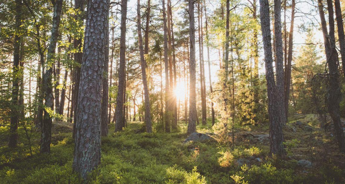 ordinamento forestale
